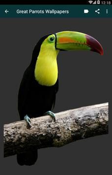 Great Parrots Wallpapers poster