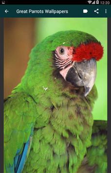Great Parrots Wallpapers apk screenshot