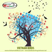 Vietnam Bird Guide icon