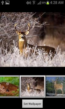 HD Deer Wallpapers poster
