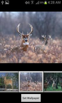 HD Deer Wallpapers screenshot 1
