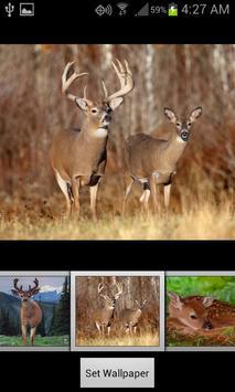 HD Deer Wallpapers screenshot 2