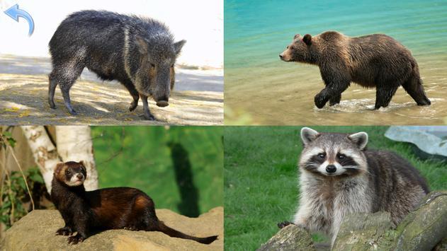 Animals for Kids, Planet Earth Animal Sounds apk screenshot