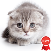 Kitten Wallpapers icon