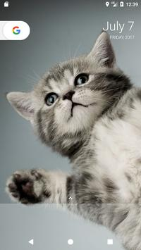 Kitten Wallpapers apk screenshot