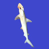 IntelliFish Free icon