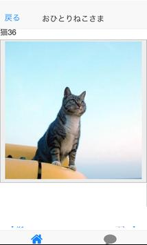Cats of Tashirojima of Japan apk screenshot