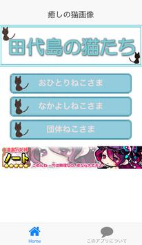 Cats of Tashirojima of Japan poster