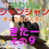 パンダの子供(シャンシャン)動画09 icon