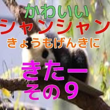パンダの子供(シャンシャン)動画09 screenshot 3