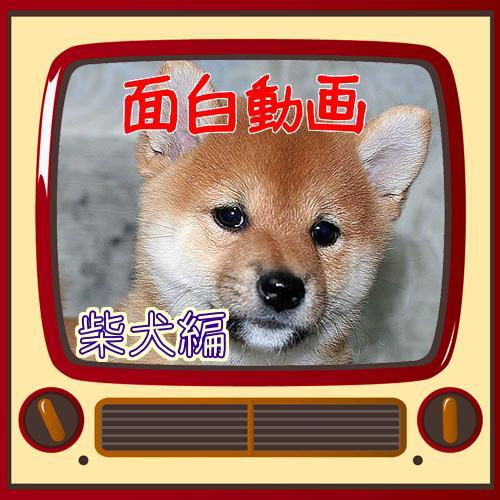 犬 おもしろ 動画