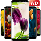 HD Tulip flower Backgrounds icon