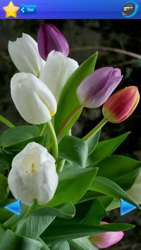 HD Tulip flower Backgrounds screenshot 14