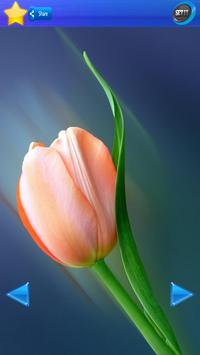 HD Tulip flower Backgrounds screenshot 18