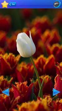 HD Tulip flower Backgrounds screenshot 1