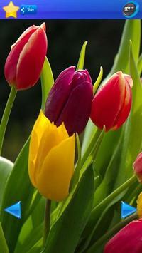 HD Tulip flower Backgrounds screenshot 27