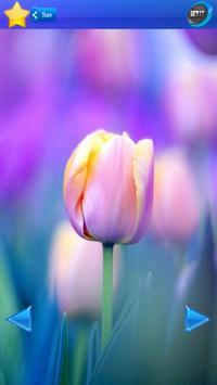 HD Tulip flower Backgrounds screenshot 4