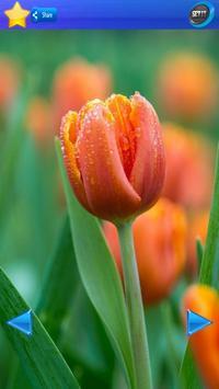HD Tulip flower Backgrounds screenshot 5