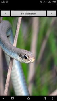 Snake on the screen 2017 apk screenshot