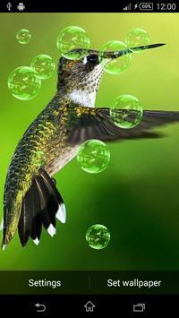 3D Bird Live Wallpaper apk screenshot