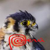 Birds of Arequipa icon
