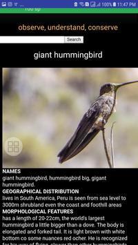 Birds of Arequipa screenshot 1