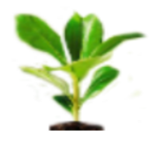 Pest-Messenger icon
