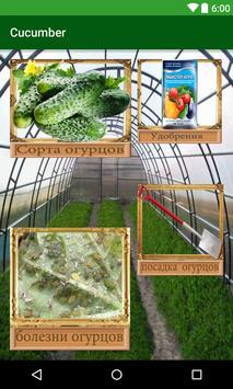 cucumber(огурец) poster