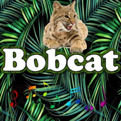The best Bobcat Sounds icon