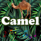 Best Camel Sounds icon