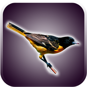 Birds Sounds and Wallpapers icon
