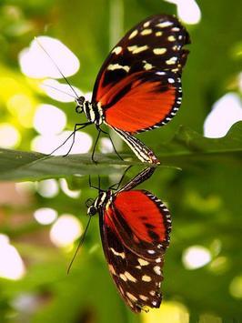 Butterfly Jigsaw Puzzles screenshot 15