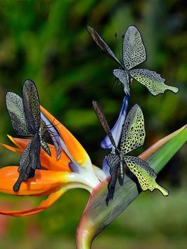 Butterfly Jigsaw Puzzles screenshot 18