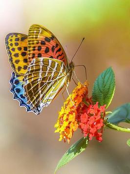 Butterfly Jigsaw Puzzles screenshot 1