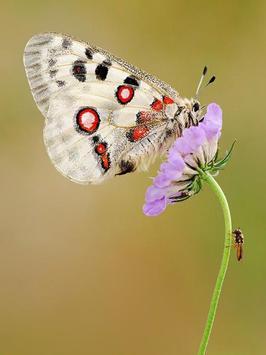Butterfly Jigsaw Puzzles screenshot 22