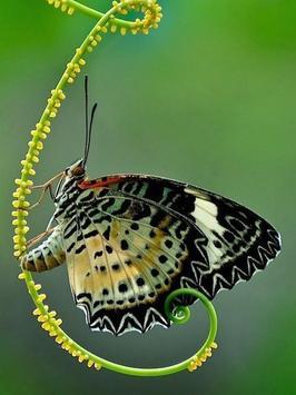 Butterfly Jigsaw Puzzles screenshot 2