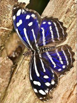 Butterfly Jigsaw Puzzles screenshot 4