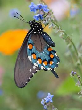 Butterfly Jigsaw Puzzles screenshot 5