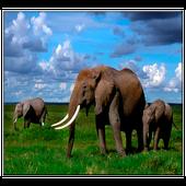 Elephant Live Wallpaper icon