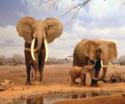 Elephant Live Wallpaper screenshot 2