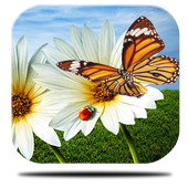 Solar butterfly Live Wallpap icon