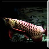 Dark Blue Arowana Fish LWP icon