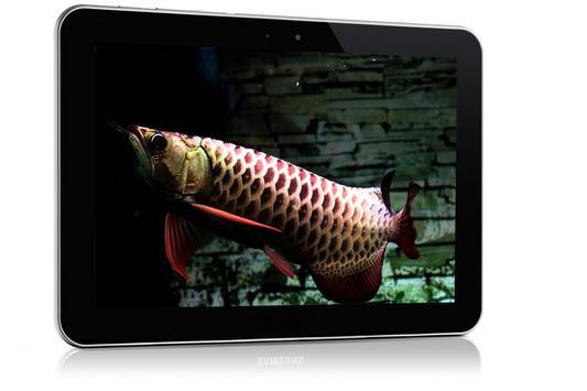 Dark Blue Arowana Fish LWP screenshot 2
