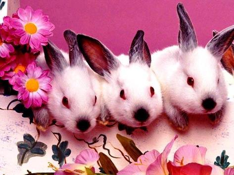 Free Cute Wallpapers apk screenshot