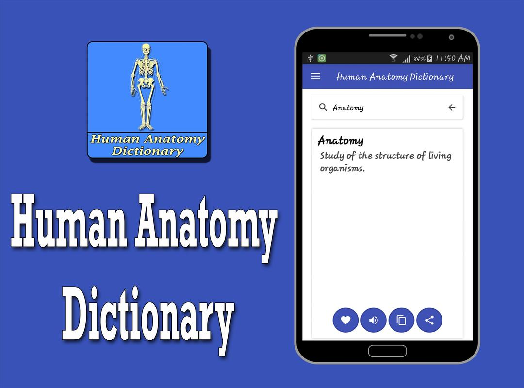 Human Anatomy Dictionary For Android Apk Download