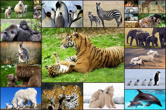 Animal Babies Jigsaw Puzzles Game - Kids & Adults poster