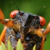 Bug Sound Central icon