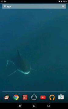 Shark video wallpaper apk screenshot
