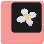 Jasmin icon