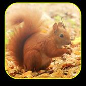Little Squirrel 3D Wallpaper icon